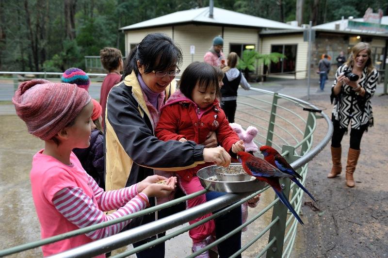 Trẻ em vui chơi tại công viên quốc gia Dandenong
