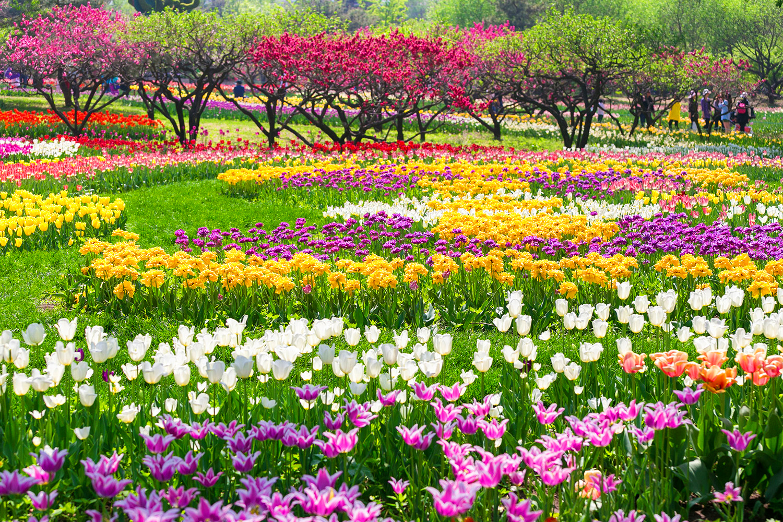 Lễ hội hoa Floriade Canberra
