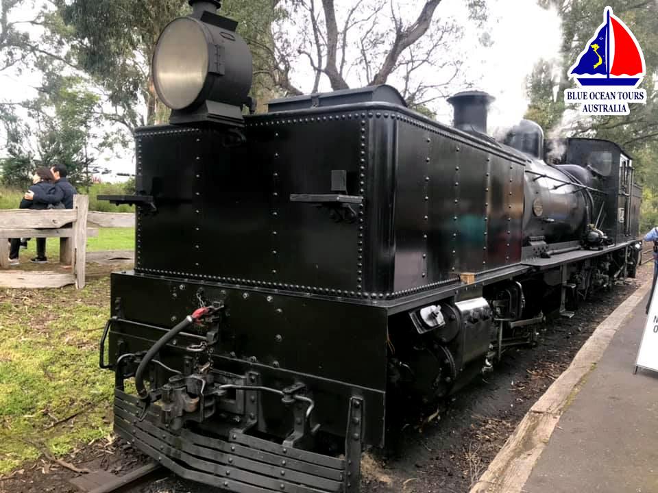 Tàu lửa hơi nước Puffing Billy được HDV Blue Ocean Tours chụp vào tháng 9/2019