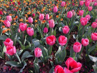 Le Hoi Hoa Floriade