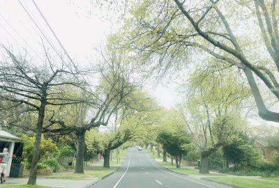 cây hai bên đường